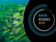 The Importance of Marine Protection